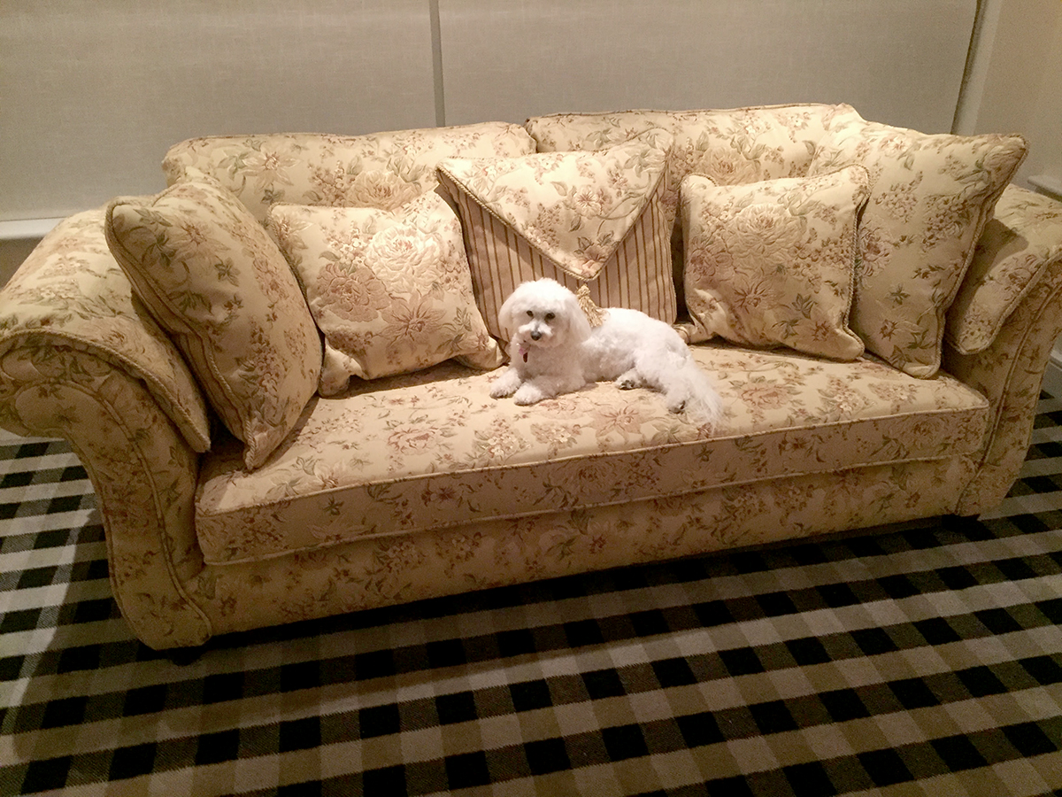 La Scala Sofa & Carrie the Dog!